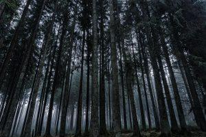 Nachtsichtgerät Test